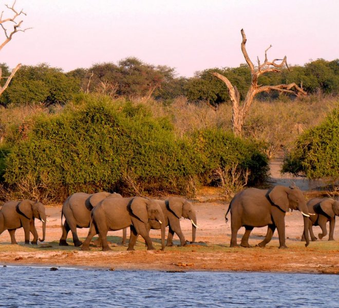 Janala Tours and Safaris - Chobe elephant