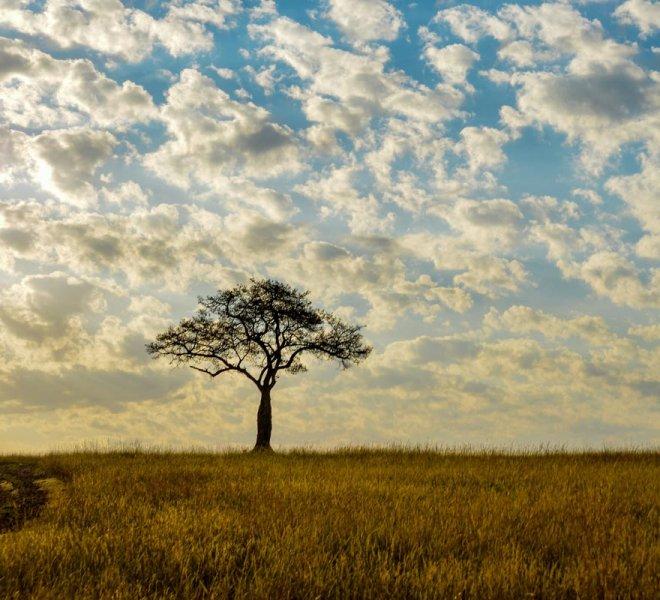 Janala Tours and Safaris - Chobe